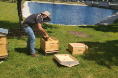 Hives1