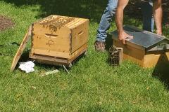 Hives3