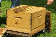 Hives4