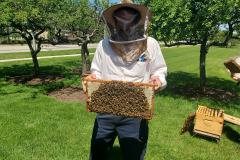 Hives6