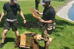 Hives7