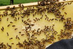 Hives8